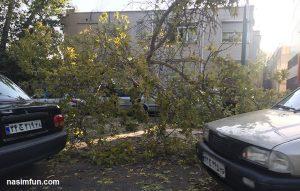 سقوط ناگهانی درخت تنومند روی چهار ماشین درتهران+تصاویر