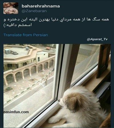 توئیت جنجالی بهاره رهنما درباره مردان: همه سگ ها از مردان بهترن!!!+عکس
