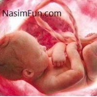 گیاهان دارویی خطرناک برای سلامت جنین