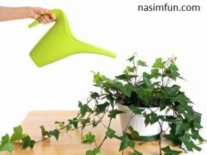 روش های نگهداری گل های آپارتمانی