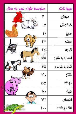 طول عمر حیوانات