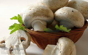 طرز تهیه خورشت قارچ و تخم مرغ مجلسی و خواص قارچ + فیلم آموزشی