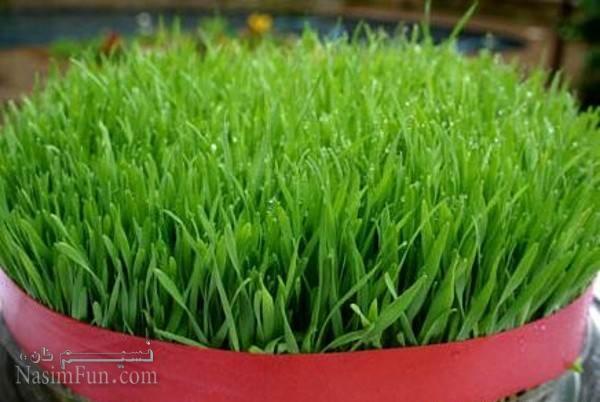 طرز تهیه سبز گندم + تصاویر و انواع مدل های آن