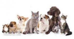 نگهداری حیوانات در منزل از دیدگاه اسلام