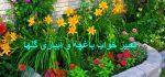 تعبیر خواب باغچه – آبیاری گل و گیاهان در خواب چه تعبیری دارد؟