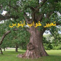 تعبیر خواب آبنوس – دیدن درخت آبنوس در خواب چه معنایی دارد؟