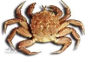 خوردن کدام آبزیان دریایی حلال است ؟