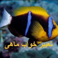 تعیبر خواب ماهی – خوردن ماهی در خواب چه تعبیری دارد؟