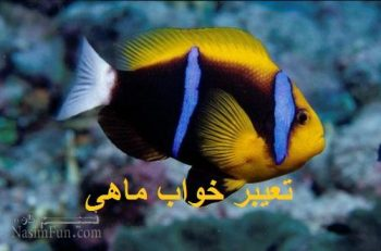 تعیبر خواب ماهی - خوردن ماهی در خواب چه تعبیری دارد؟