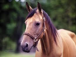 تعبیر خواب اسب - اسب سواری در خواب چه تعبیری دارد؟