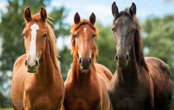 تعبیر خواب اسب - اسب سواری در خواب چه تعبیری دارد؟تعبیر خواب اسب - اسب سواری در خواب چه تعبیری دارد؟