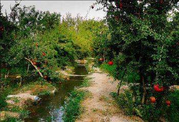 تعبیر خواب باغ - دیدن باغ میوه در خواب چه تعبیری دارد؟