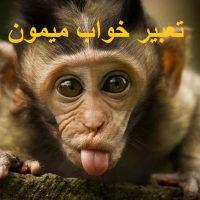 تعبیر خواب میمون – دیدن میمون در خواب چه تعبیری دارد؟