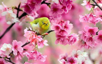 تعبیر خواب بهار + تعبیر خواب شکوفه
