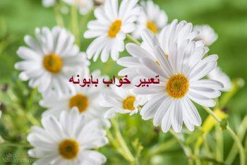 تعبیر خواب بابونه - دیدن گل بابونه در خواب چه مفهومی دارد؟