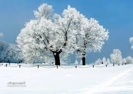 عکس طبیعت برفی
