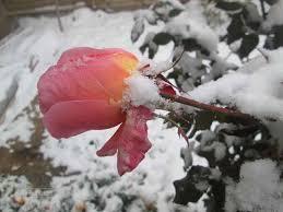 عکس نوشته های مناظر زمستانی خاص
