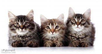 تعبیر خواب گربه - دیدن بچه گربه در خواب چه معنایی دارد؟