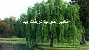 تعبیر خواب درخت بید - دیدن درخت بید در خواب چه تعبیری دارد؟