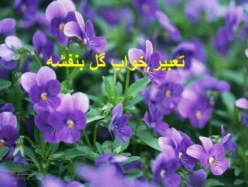 تعبیر خواب گل بنفشه + معنی چیدن گل بنفشه در خواب