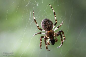 تعبیر خواب عنکبوت + تعبیر خواب نیش زدن و کشتن عنکبوت