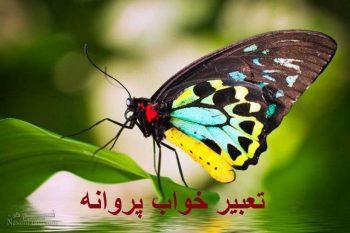 تعبیر خواب پروانه - دیدن پروانه مرده در خواب چه تعبیری دارد؟