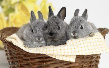 تعبیر خواب خرگوش - دیدن خرگوش در خواب چه تعبیری دارد؟