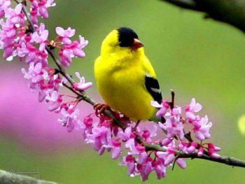 تعبیر خواب پرنده - دیدن پرنده مرده در خواب چه تعبیری دارد؟
