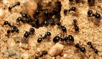 تعبیر خواب مورچه - دیدن مورچه در خواب چه تعبیری دارد؟