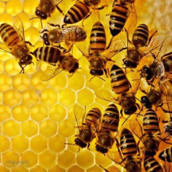 تعبیر خواب زنبور - نیش زدن زنبور در خواب چه تعبیری دارد؟