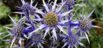 تعبیر خواب خار – دیدن تیغ گیاهان در خواب چه تعبیری دارد؟