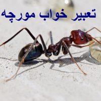 تعبیر خواب مورچه – دیدن مورچه در خواب چه تعبیری دارد؟
