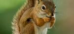 تعبیر خواب سنجاب – دیدن سنجاب در خواب چه مفهومی دارد؟