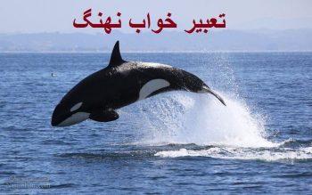 تعبیر خواب نهنگ - دیدن نهنگ در خواب چه تعبیری دارد؟