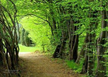 تعبیر خواب جنگل - دیدن جنگل در خواب چه تعبیری دارد؟