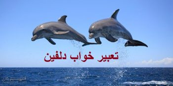 تعبیر خواب دلفین - دیدن دلفین در خواب چه تعبیری دارد؟