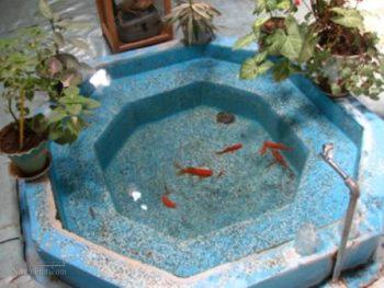 تعبیر خواب حوض - دیدن حوض ماهی در خواب چه مفهومی دارد؟