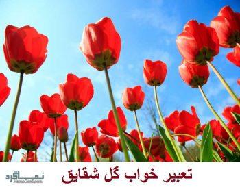 تعبیر خواب گل شقایق - معنی چیدن گل شقایق در خواب چیست؟