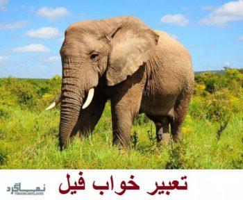 تعبیر خواب فیل   دیدن فیل در خواب چه مفهومی دارد؟