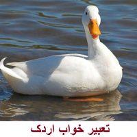 تعبیر خواب اردک – دیدن اردک در خواب چه معنایی دارد؟