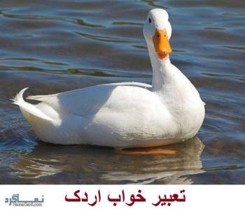 تعبیر خواب اردک - دیدن اردک در خواب چه معنایی دارد؟