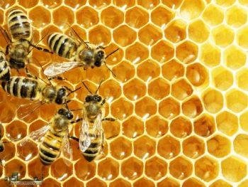 تعبیر خواب کندوی عسل - معنی دیدن کندوی عسل در خواب چیست؟