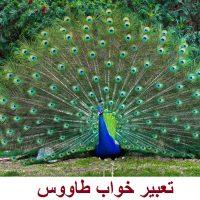تعبیر خواب طاووس | دیدن طاووس در خواب چه تعبیری دارد؟