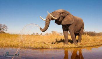 تعبیر خواب فیل | دیدن فیل در خواب چه مفهومی دارد؟