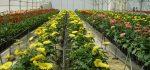 تعبیر خواب گلخانه – معنی و مفهوم دیدن گلخانه در خواب چیست؟