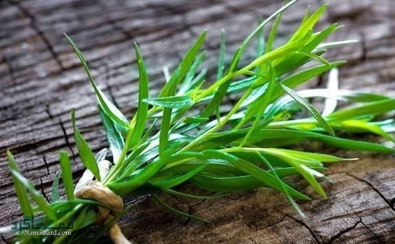خواص ترخون چیست؟ | 42 خاصیت درمانی و مضرات سبزی ترخون