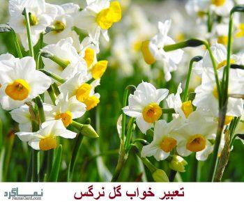تعبیر خواب گل نرگس + تعبیر خواب بوییدن و چیدن گل نرگس در خواب