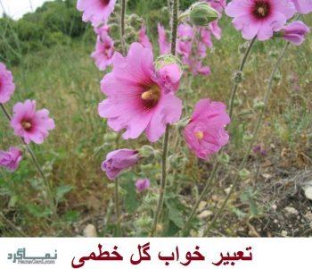 تعبیر خواب گل خطمی - معنی دیدن گل خطمی در خواب چیست؟