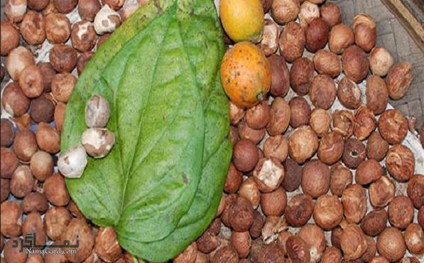 گیاه فوفل | خواص درمانی فوفل برای سلامتی و اعصاب | عوارض مصرف آن