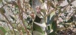 گیاه کرتس | خواص درمانی گیاه کرتس برای نفخ شکم